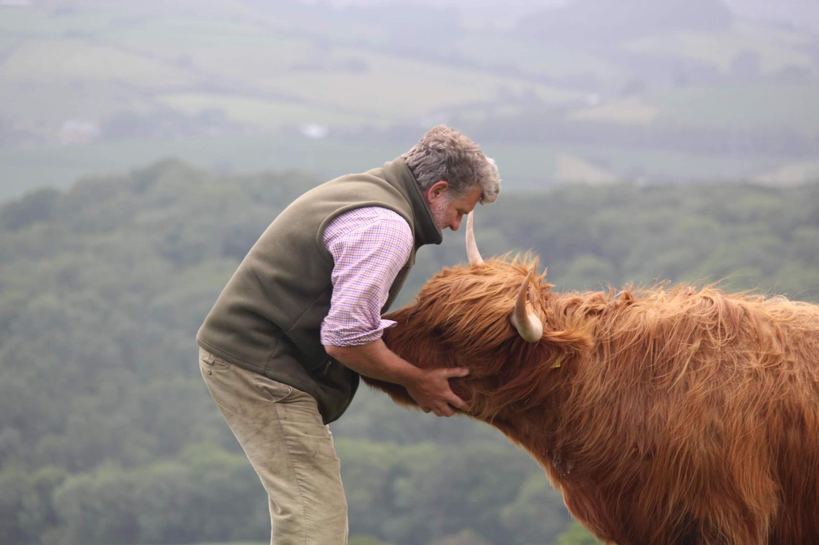 Highland cow with farmer - promoting Gladis Law campaign