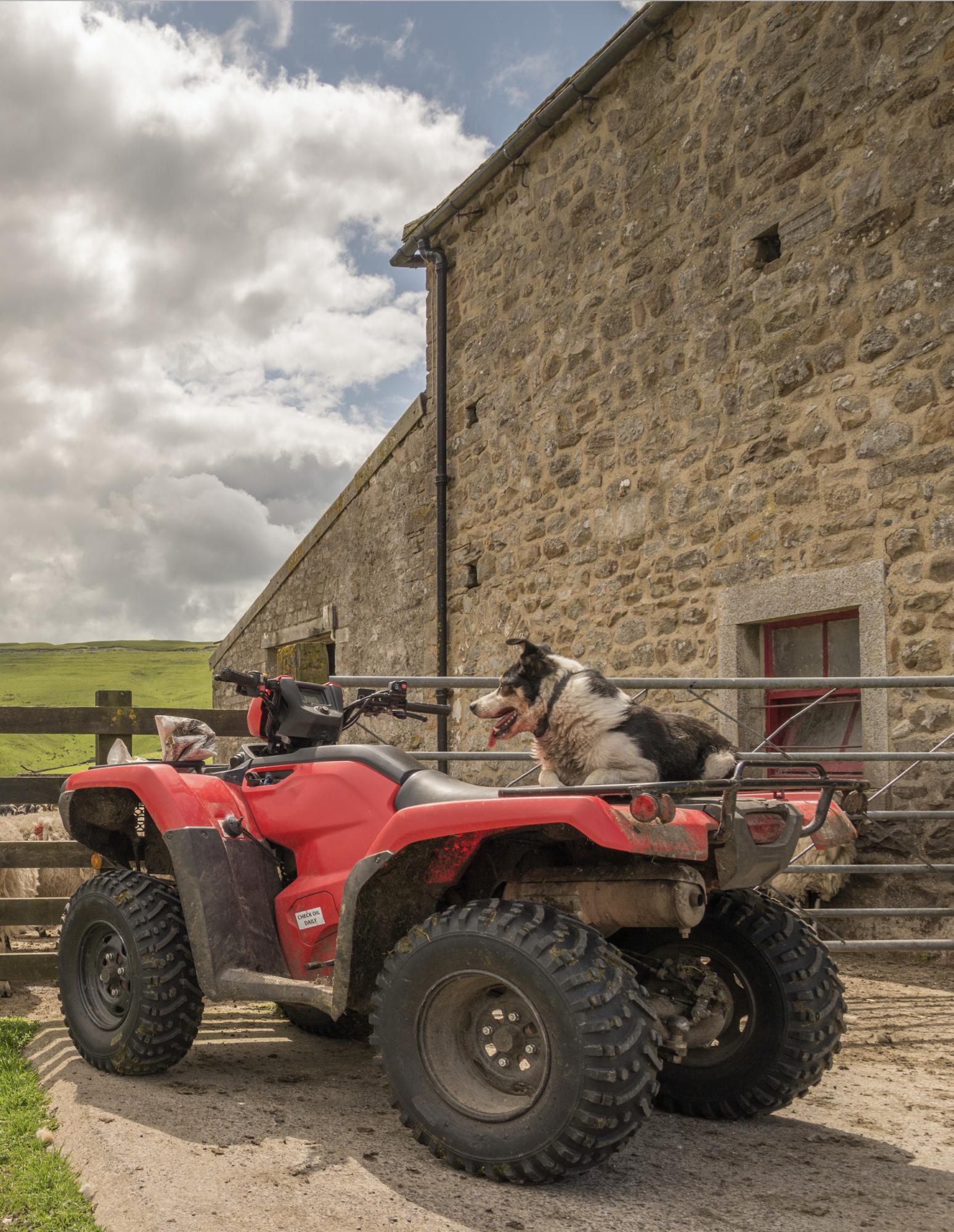 Farming dog. UK dog thefts
