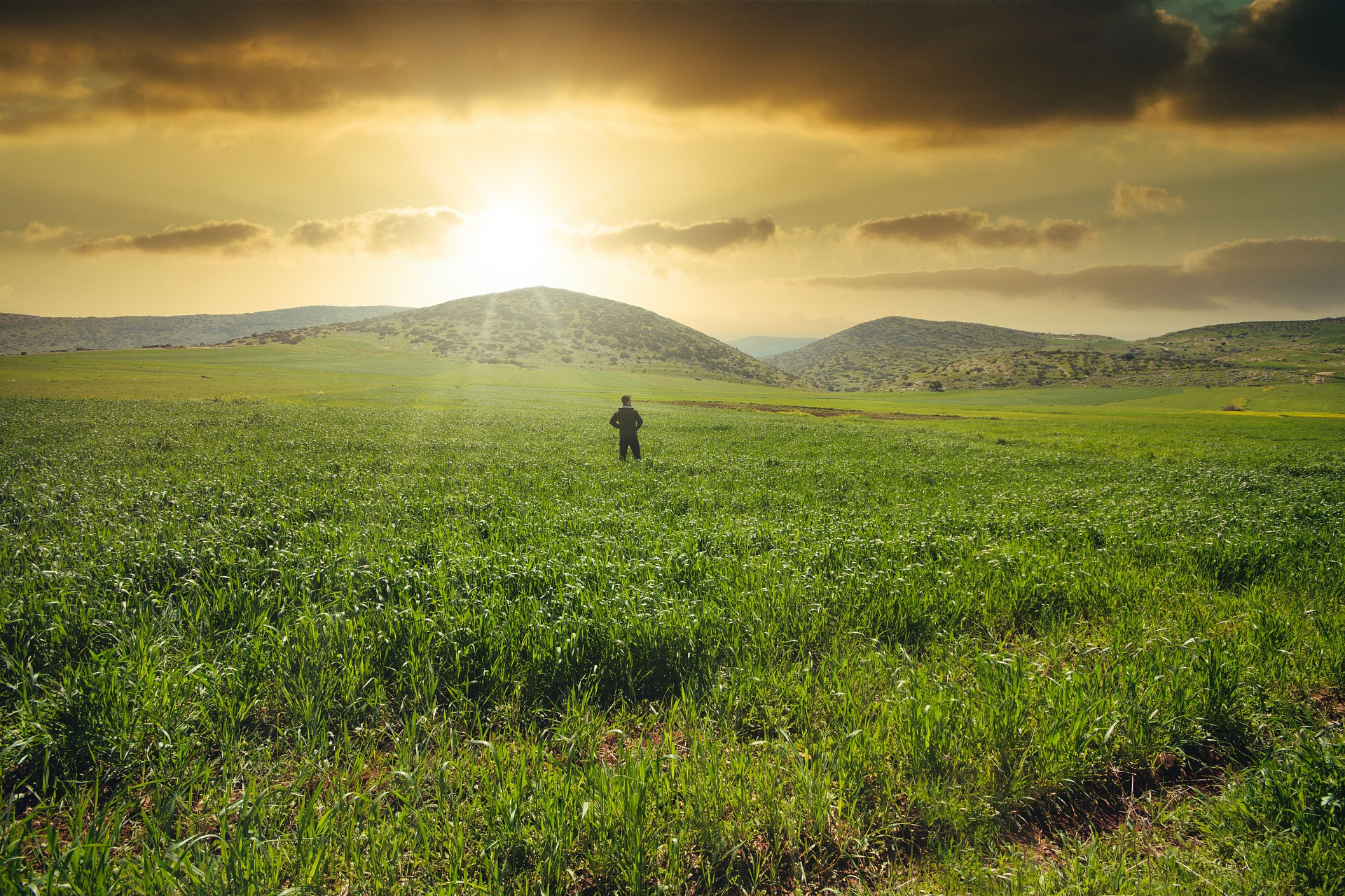 farmer alone in a green field with the sun setting over the hill in the background