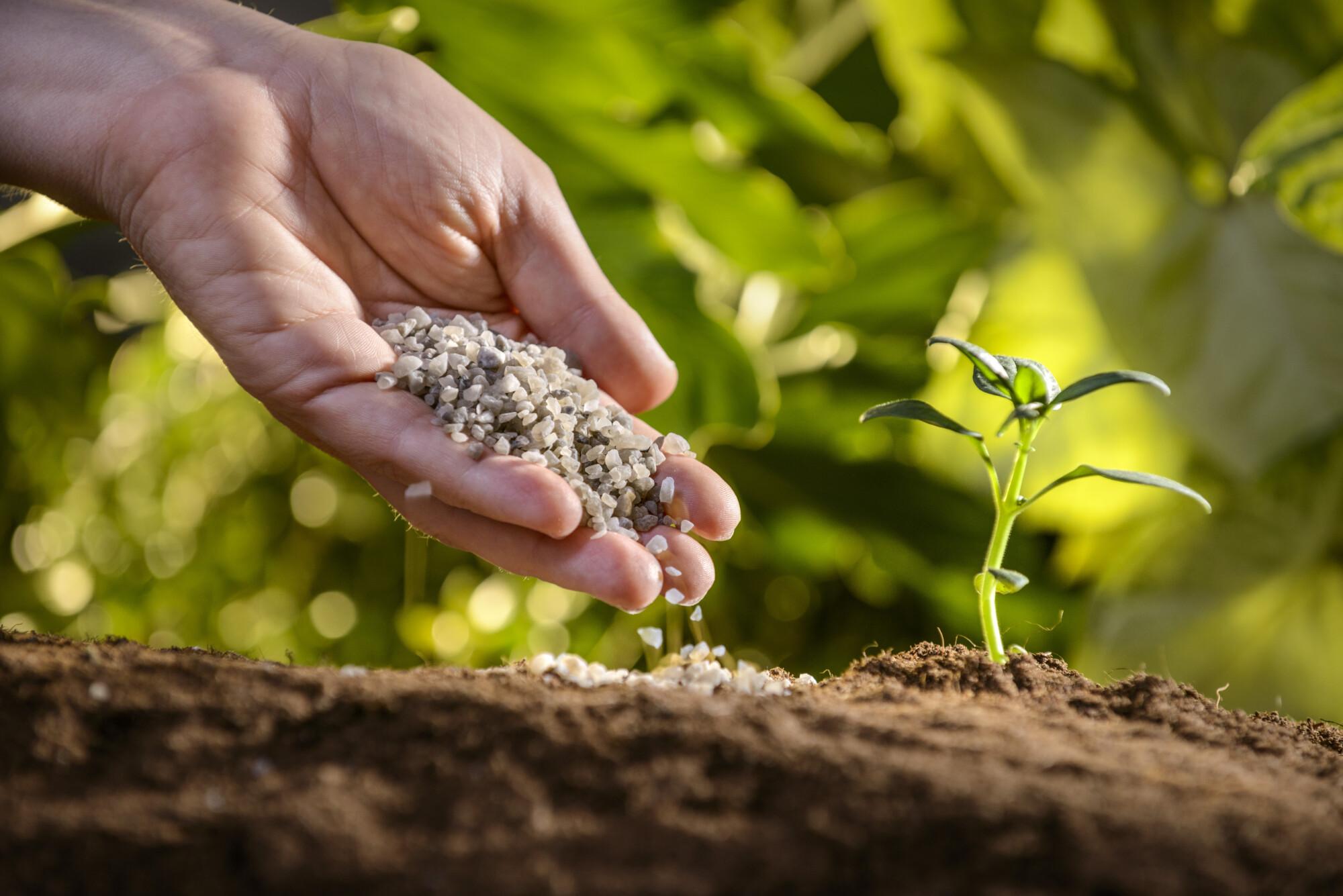 Hand holding fertiliser above the soil