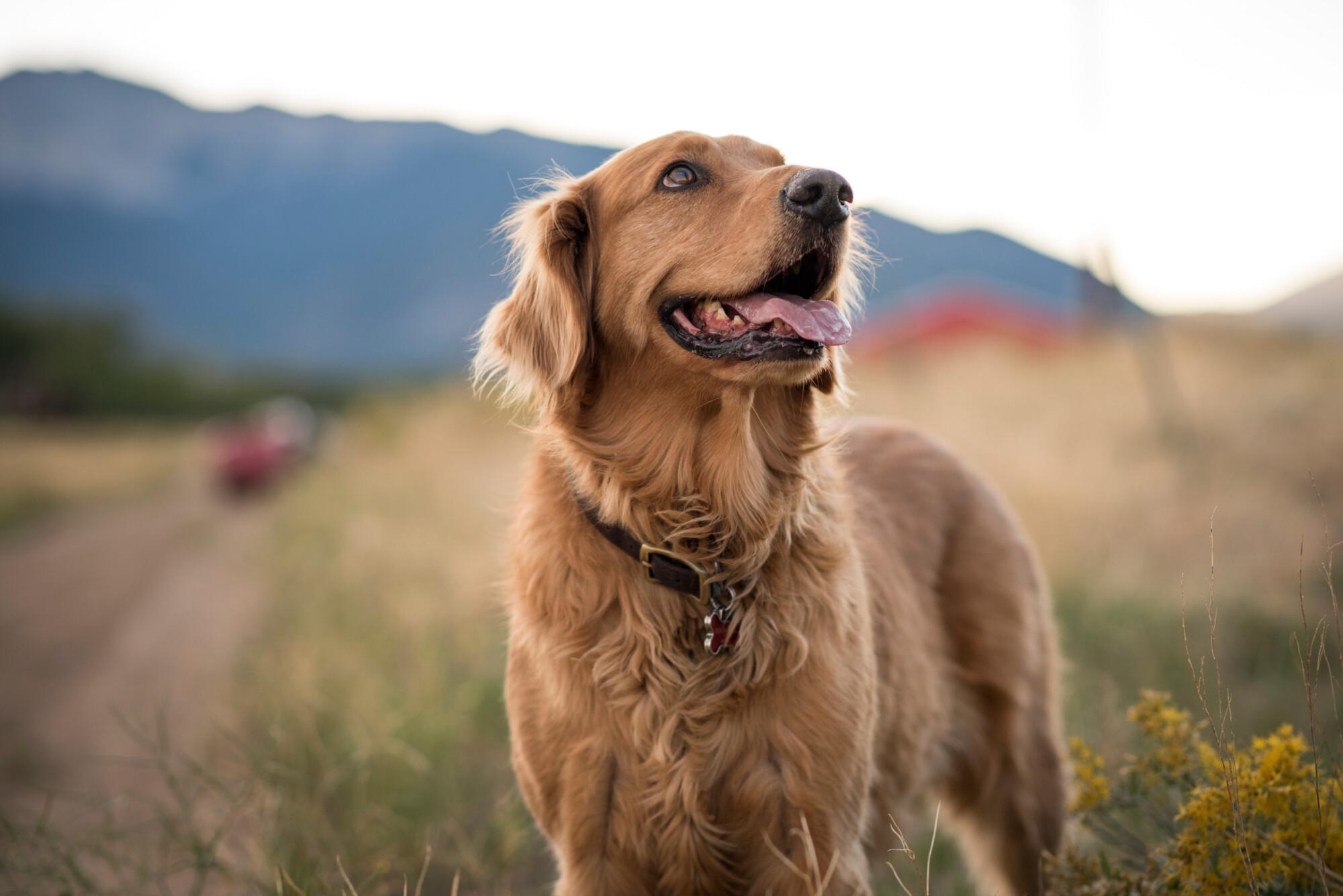 Dog countryside