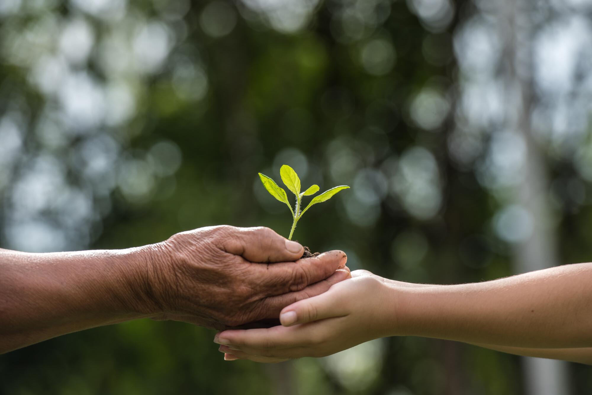 Farming inheritance succession