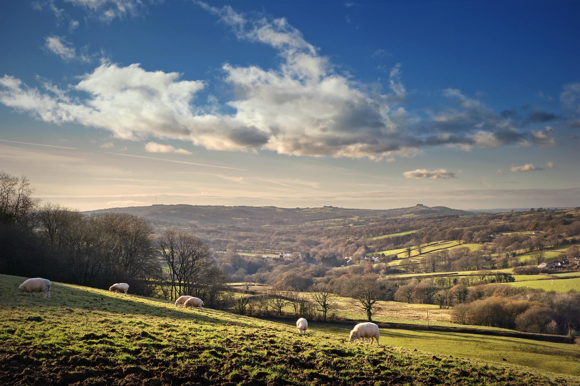 countryside farmland