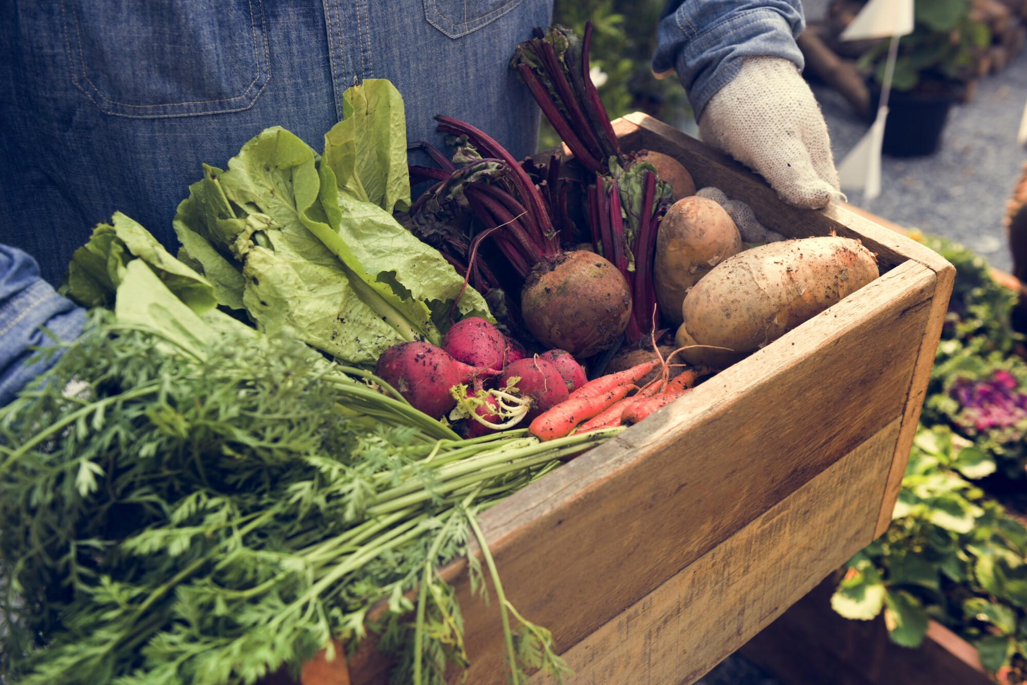Combining regenerative ag with diverse income streams