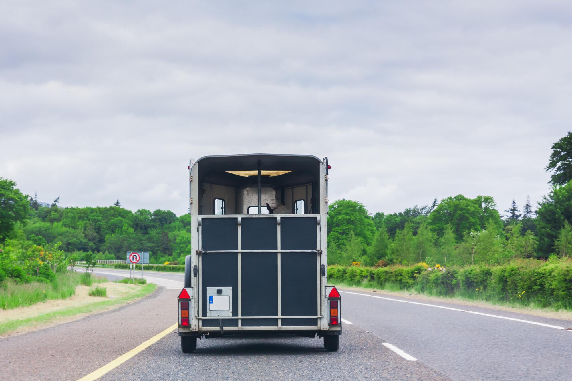 trailer law changes Uk. Horse transport on motorway.