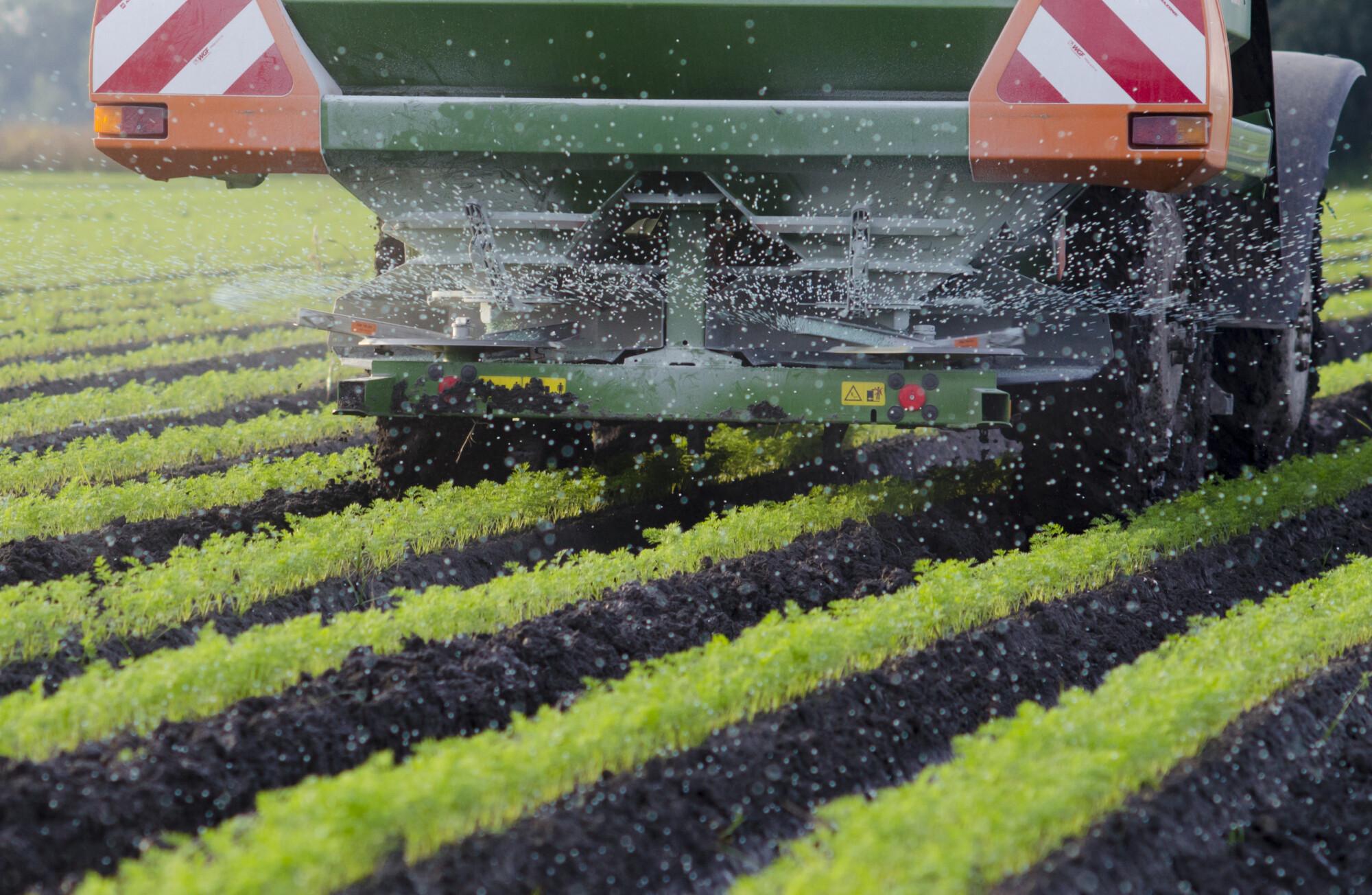 Agriculture - A farmer spraying fertiliser on his carrots
