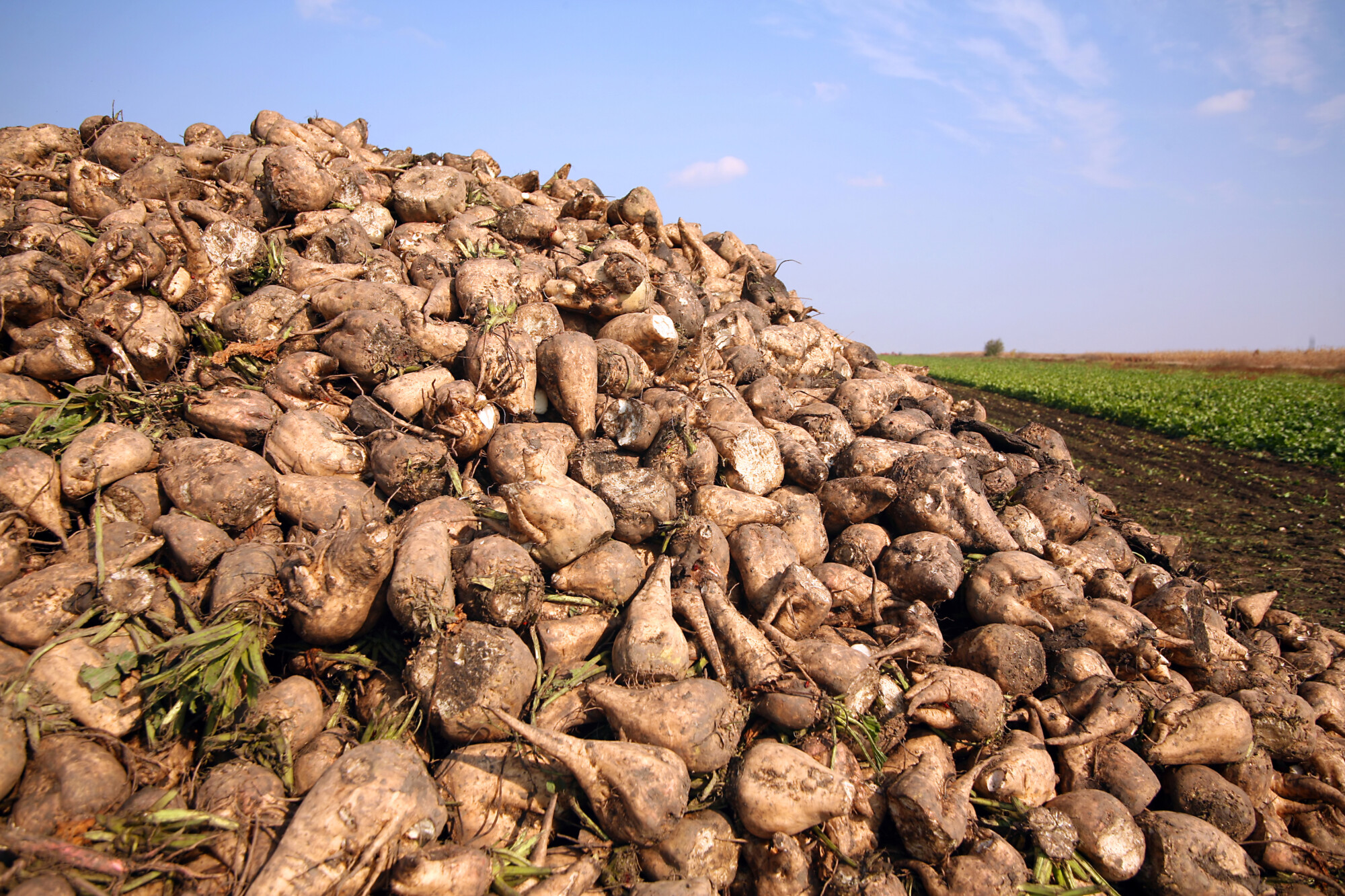 Sugar beet contract agreed for 2022
