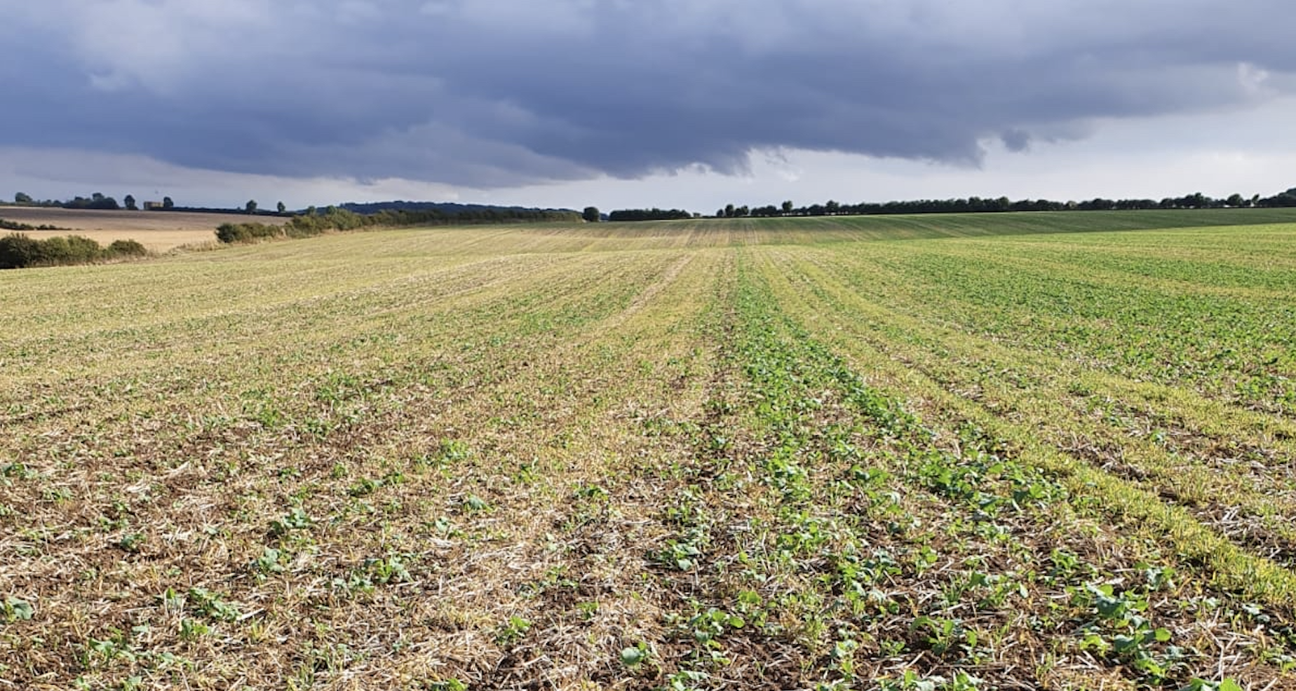 Positive start to OSR primed seed trials