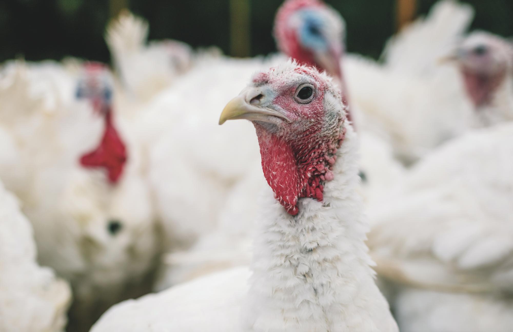 Prepare now for the avian influenza risk period